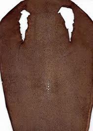 Купить Баранья кожа