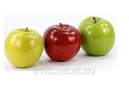 Купить Яблоки на экспорт Молдова