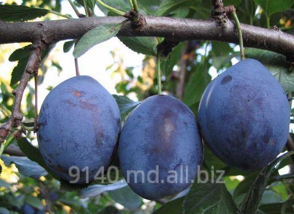 Купить Prune la export din Moldova