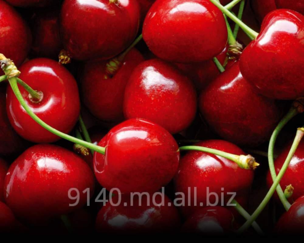 Купить Вишня на экспорт Молдова