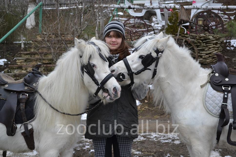 Купить Пони в Молдове