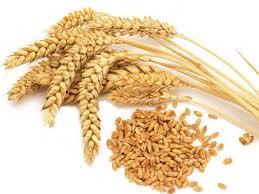 Купить Отруби пшеничные