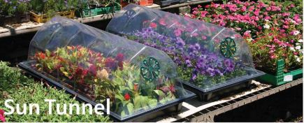 Buy Greenhouses garden in Moldova