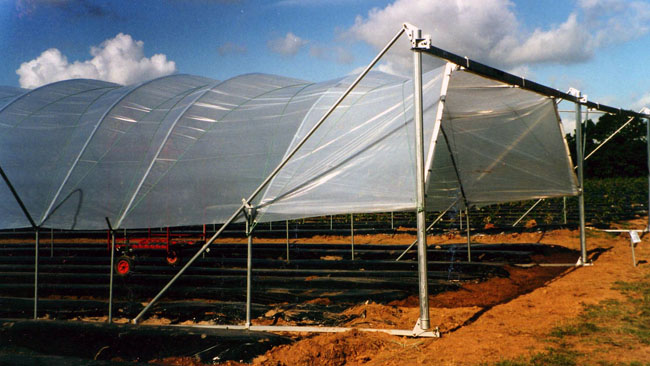 Buy Greenhouse tunelnny FT