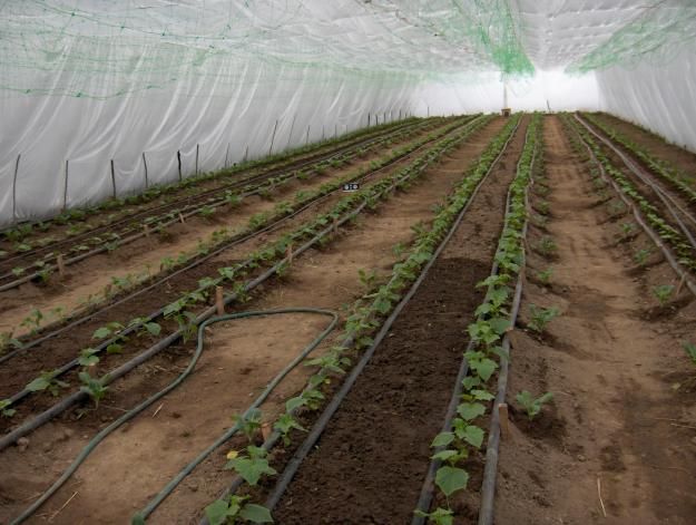 Greenhouses under film in Moldova