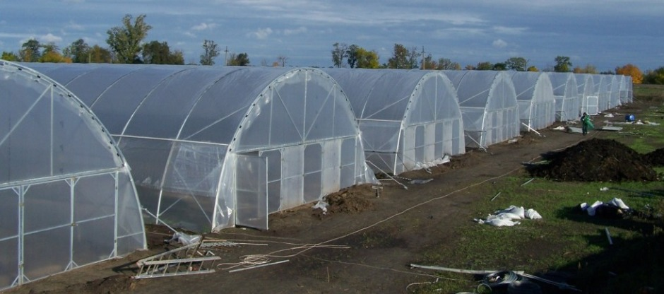 Buy Greenhouses sale Moldova