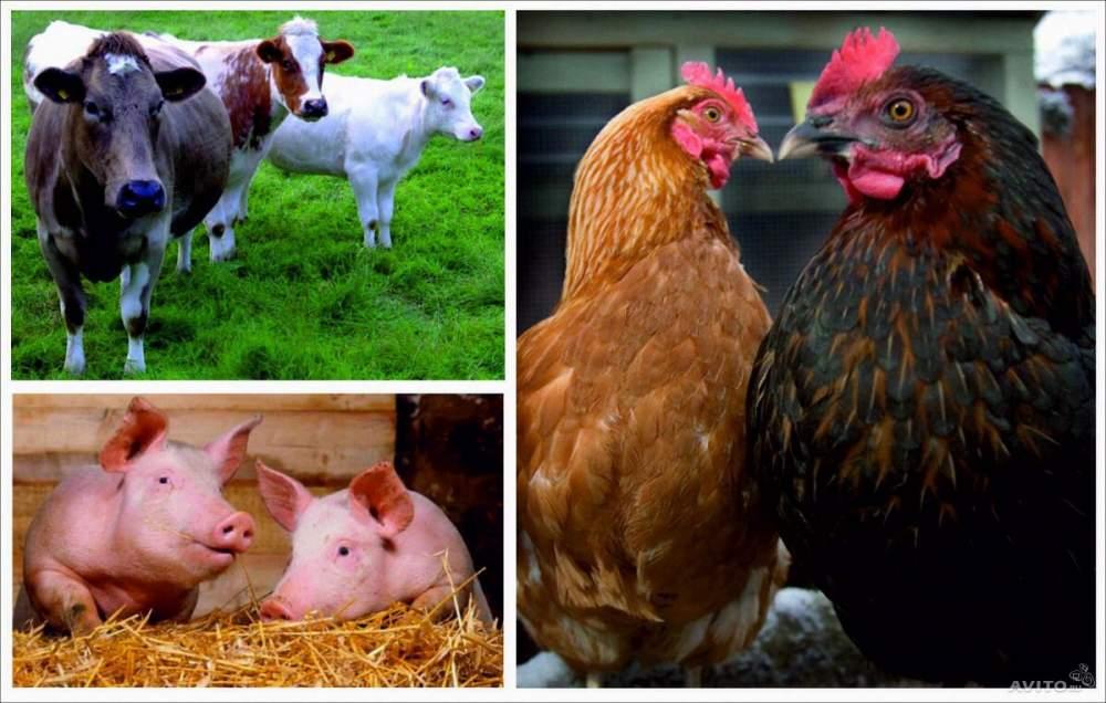 Купить Комбикорма для животных под заказ