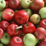 Яблоко сушеное (Malus domestica)