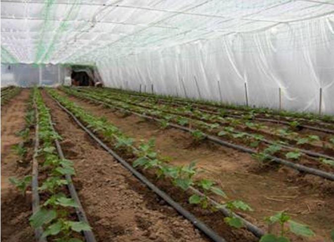 Sistemul de irigare prin picurare, Netafim(Israel)