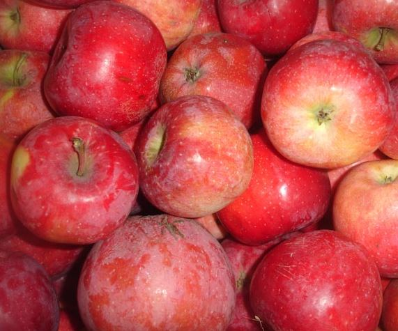 Купить Яблоки Florina