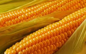 Купить Porumb (Кукуруза)