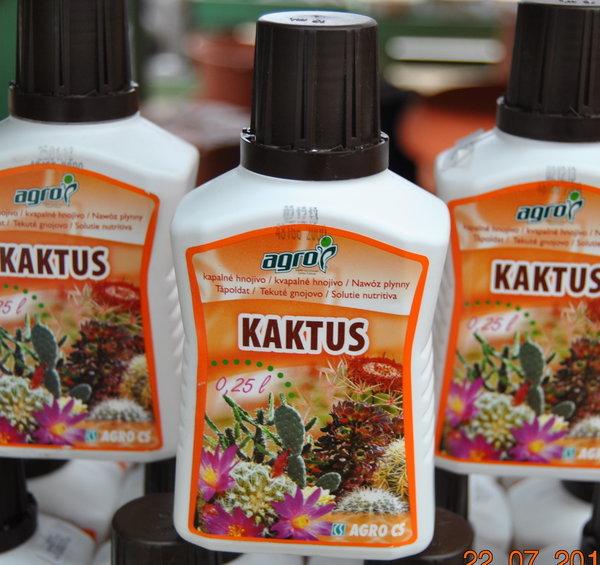 Купить Cactuşi şi plante suculente