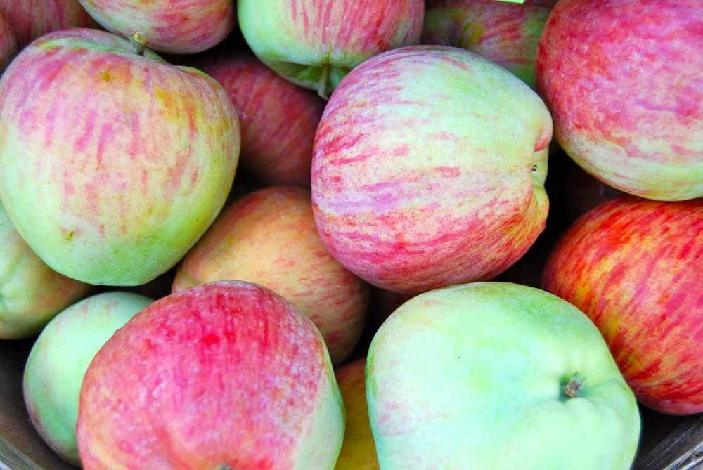 Купить Яблоки Кортланд