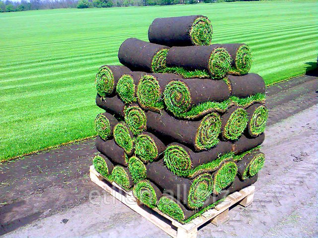 Buy The lawn is rolled