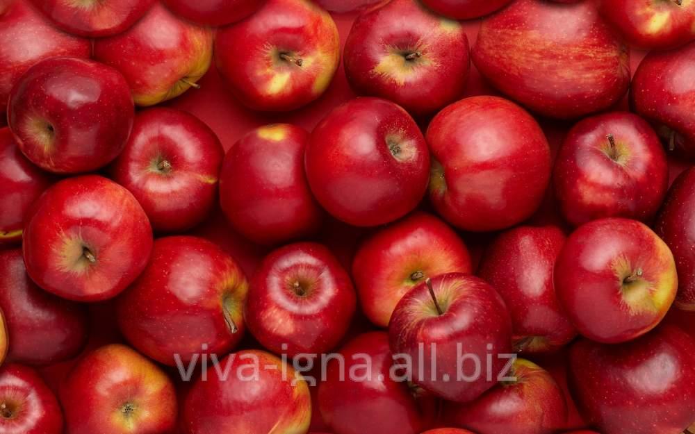 Яблоки молдавские на экспорт