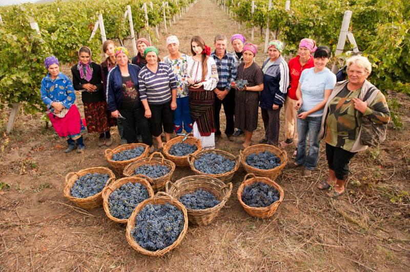 Купить Кредо компании Gitana — производство зрелых, высшего качества вин