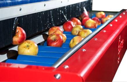 Сортировочные машины для овощей SORTER
