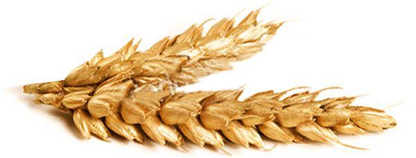 Buy Grain