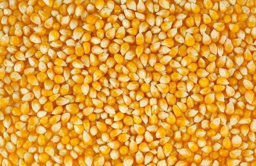 Buy Corn, Whea