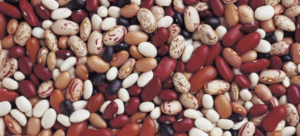 Buy Haricot seeds