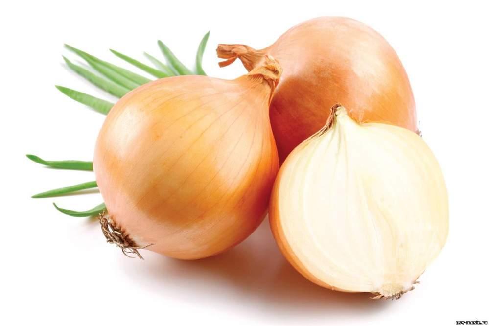 Buy Onions in Moldova