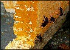 Купить Пчелиный мед