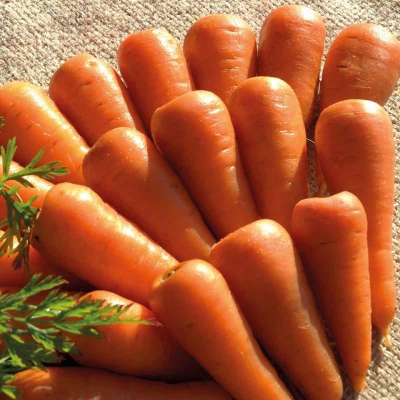 Купить Seminte morcov Royal Chantenay 2