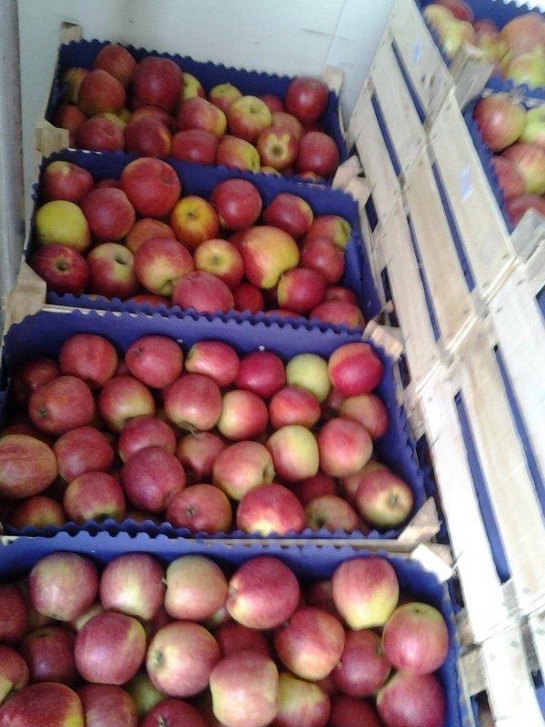 Купить Бумага для яблок Кишинев