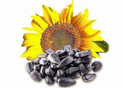 Купить Ядро семян подсолнечника