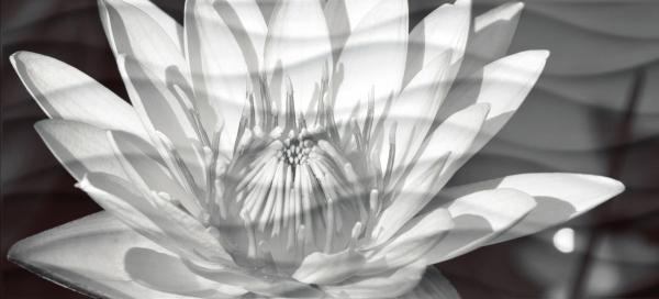 Купить Плитка настенная Wave Black Flowers Вставка 20x44 WA2G441D