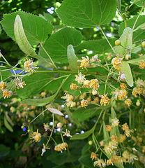 Лекарственные травы Selling medicinal herbs, dried)