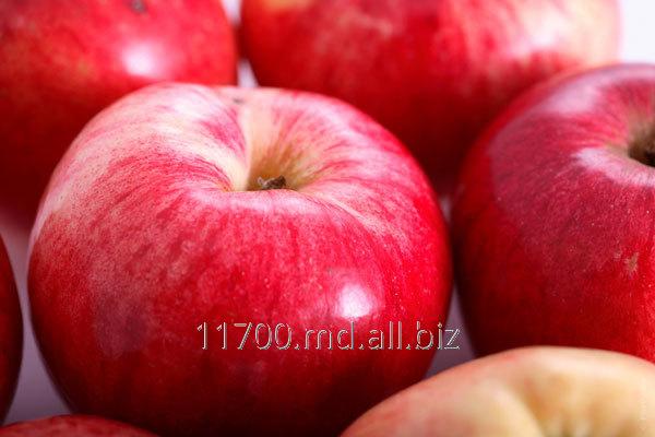 Купить Яблоки : Сорта Golden Delicious, Granny Smith, Fuji, Gala
