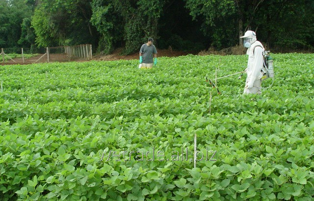 Buy Sprinter 70 WG fungicide