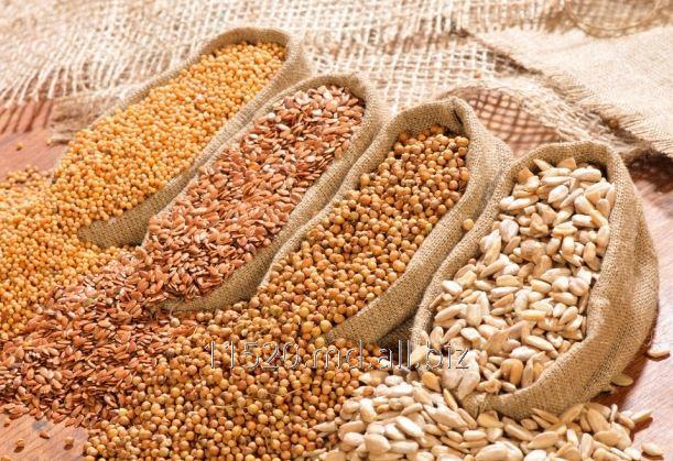 Купить Семена сельскохозяйственных культур