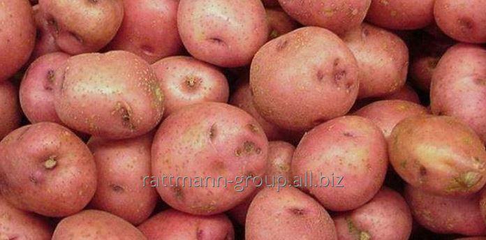 Buy Tripping potatoes in Moldova, Aroza