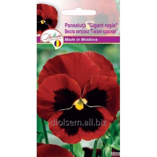Семена Евро Витрока гигант Красная