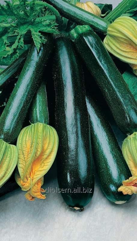 Семена Евро Кабачок Черный Красавец