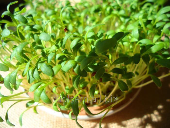 Семена Евро Кресс-салат Обыкновенный