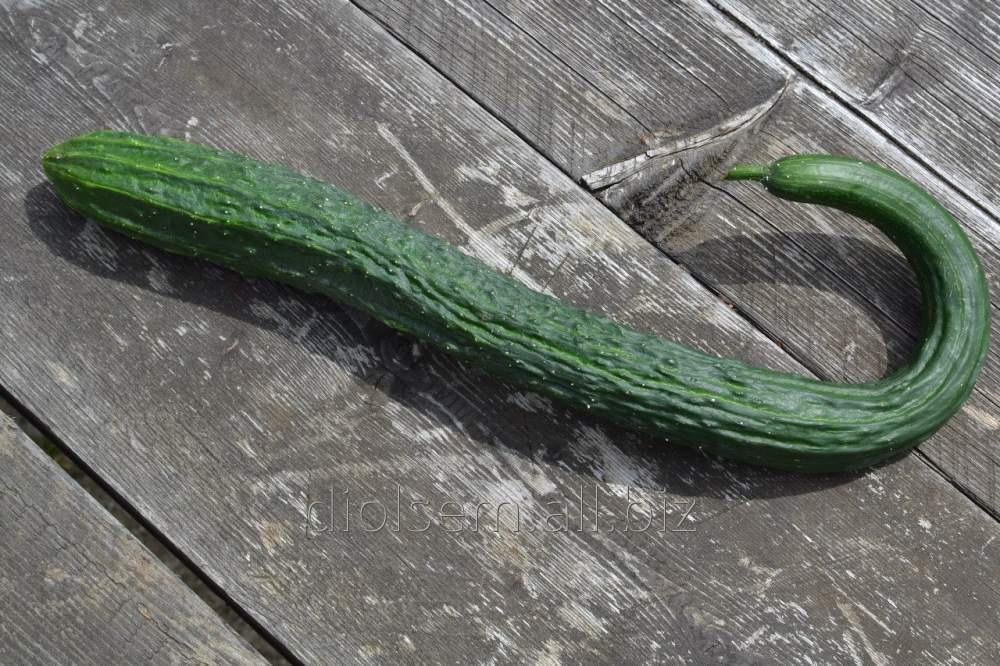 Семена Евро Огурец Китайский змей