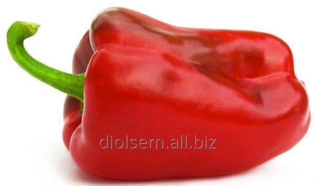 Купить Семена Евро Перец Калипсо
