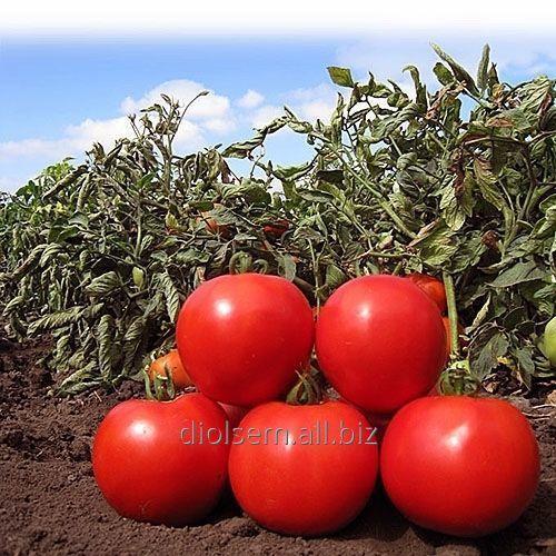 Семена Голд Томат KS 835 F1