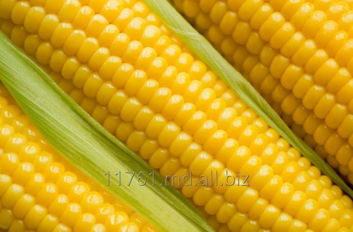 Купить Кукуруза.
