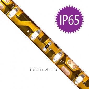 Светодиодная лента FN LS604