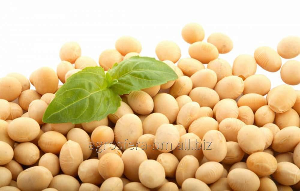 Buy Soy for export from Moldova