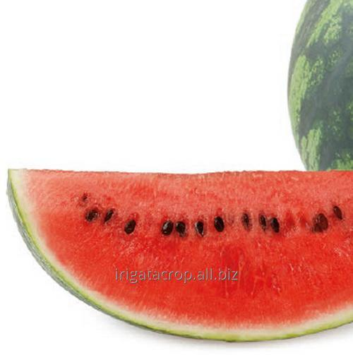 Buy Water-melon seeds Colombia F1