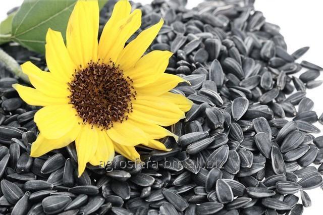 Купить Seminte de floarea soarelui din Moldova de la AGROSFERA-BM