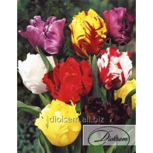 Луковицы тюльпана Mixed 12200