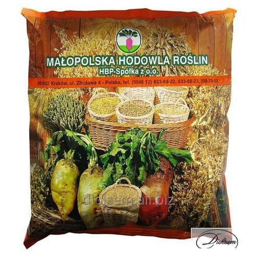 Buy Fodder beet of Ursus Pauly of 1 kg