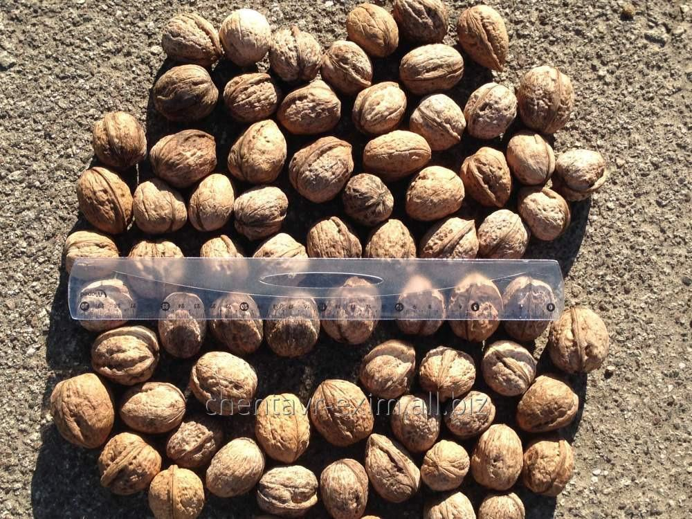 Купить Орехи на экспорт