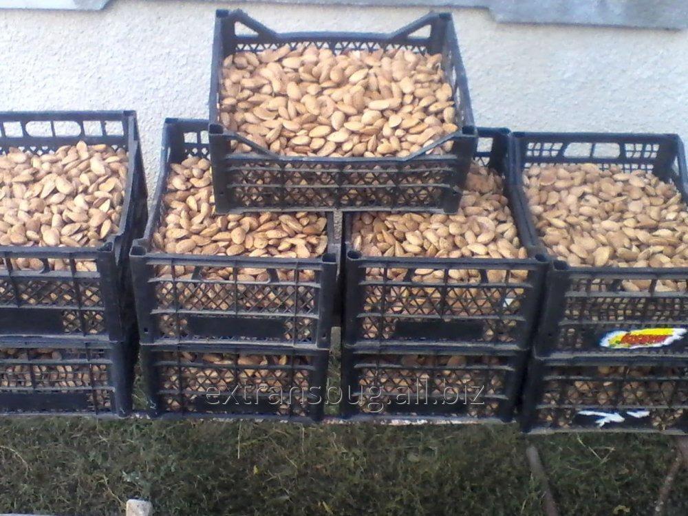 Купить Migdale in coarja, miez de migdale,nuci, орехи, alune